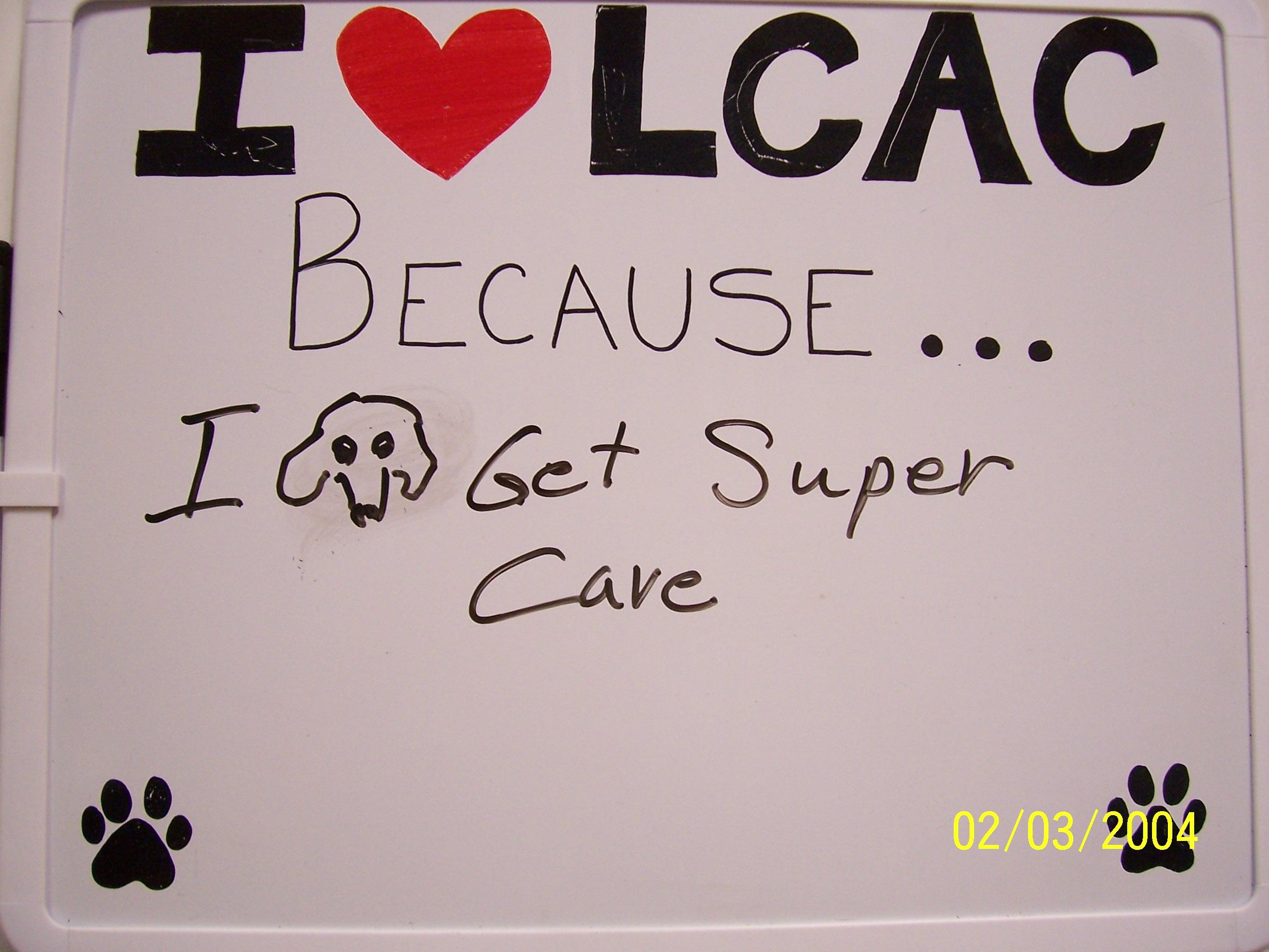 Lincoln City Animal Clinic - Veterinarian in Lincoln City ...